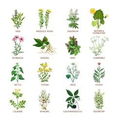 Medicinal Herbs Icons Flat vector image