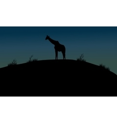 One giraffe silhouette in hills vector image