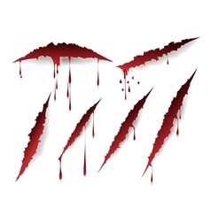 Bloody scratches and blood drops vector image