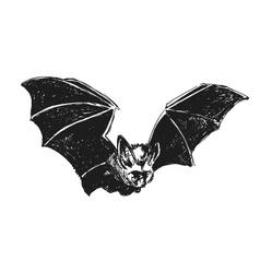 Hand sketch bat vector image