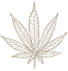 engraving drawing of cannabis leaf vector image