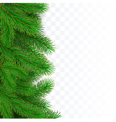 fir tree border background christmas tree vector image