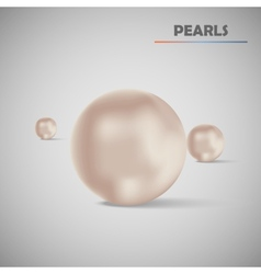 Set realistic pearls vector image