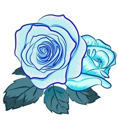 blu rose vector image