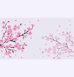 cherry blossom sakura background with pink flower vector image