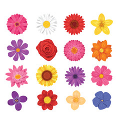 Flower set isolated on white background vector