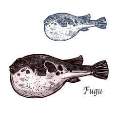 Fugu fish sketch of japanese pufferfish vector