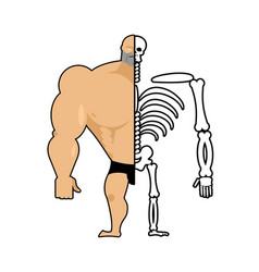 human structure half body and skeleton anatomic vector image