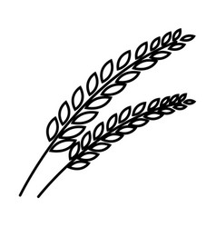 Thin line wheat icon vector