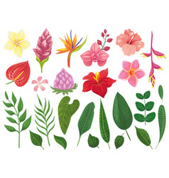 Tropical flowers tropics flower leaves summer vector