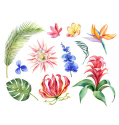 Watercolor set with tropical leaves and vector