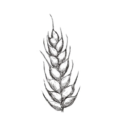 Wheat ears icon Grain design graphic vector image vector image