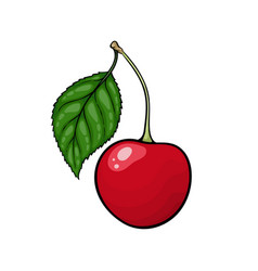 beautiful cartoon red cherry with black contour vector image