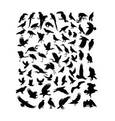 bird animal vector image