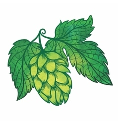 Hops Icon vector image