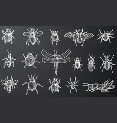 Insects set with beetles bees and spiders on vector