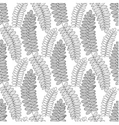 seamless pattern with acacia leaves line art vector image