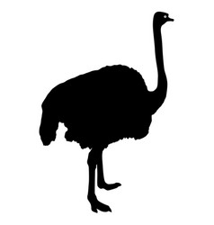 Silhouette big ostrich standing on a white vector