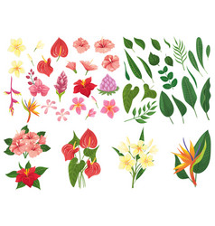 tropical flower tropic forest flowers exotic vector image