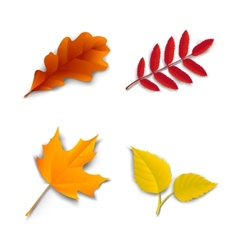 Autumn oak maple ash birch leaves vector