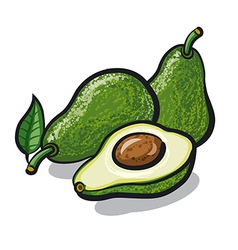 avocado vector image