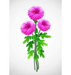 bouquet red flower chrysanthemum vector image