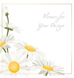 Chamomile daisy flowers herbs bouquet isolated vector