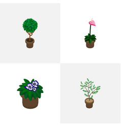 isometric flower set of houseplant flower vector image