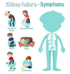 Kidney failure symptoms information infographic vector