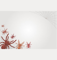small and large spiders tarantulas on a white vector image