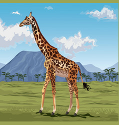 colorful scene african landscape with giraffe vector image vector image