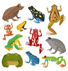 Frog cartoon tropical animal cartoon amphibian vector