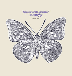 great purple emperor sasakia charonda hand draw vector image