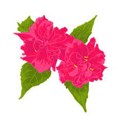 pink flower isolated on white background vector image