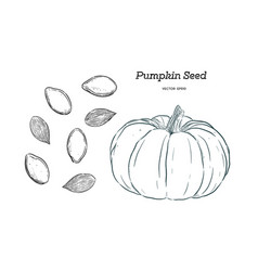 pumpkin seed hand draw vector image