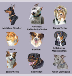 Set of portraits of dog breeds-2 vector