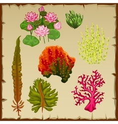Algae and corals decoration of the seabed vector image