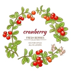 cranberry set vector image