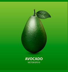 3d realistic whole avocado with leaf vector