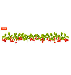 border of leaves and berry of lingonberry plant vector image