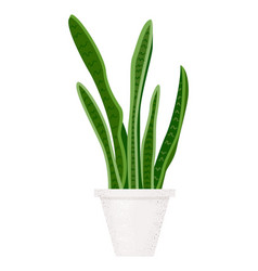 modern sansevieria great design for any purposes vector image