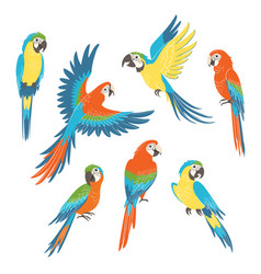 set macaw parrots vector image