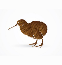 kiwi bird cartoon graphic vector image