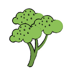 drawing broccoli vegetable diet nutrition vector image vector image