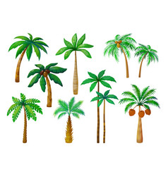 Cartoon palm tree jungle palm trees with green vector
