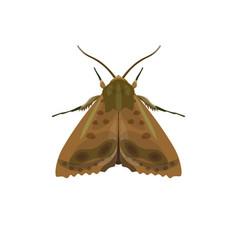 Codling moth vector