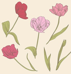 decorative tulips set vector image