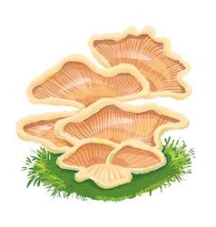 Heap plate of mushrooms mushroom family on grass vector