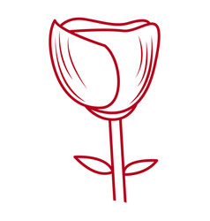 isolated rose drawing vector image