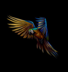 portrait blue-and-yellow macaw in flight on a vector image